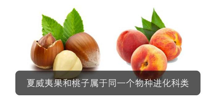 夏威夷果和桃子