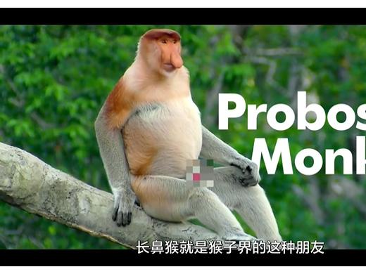 世界动物保护协会:丑动物也需要关爱